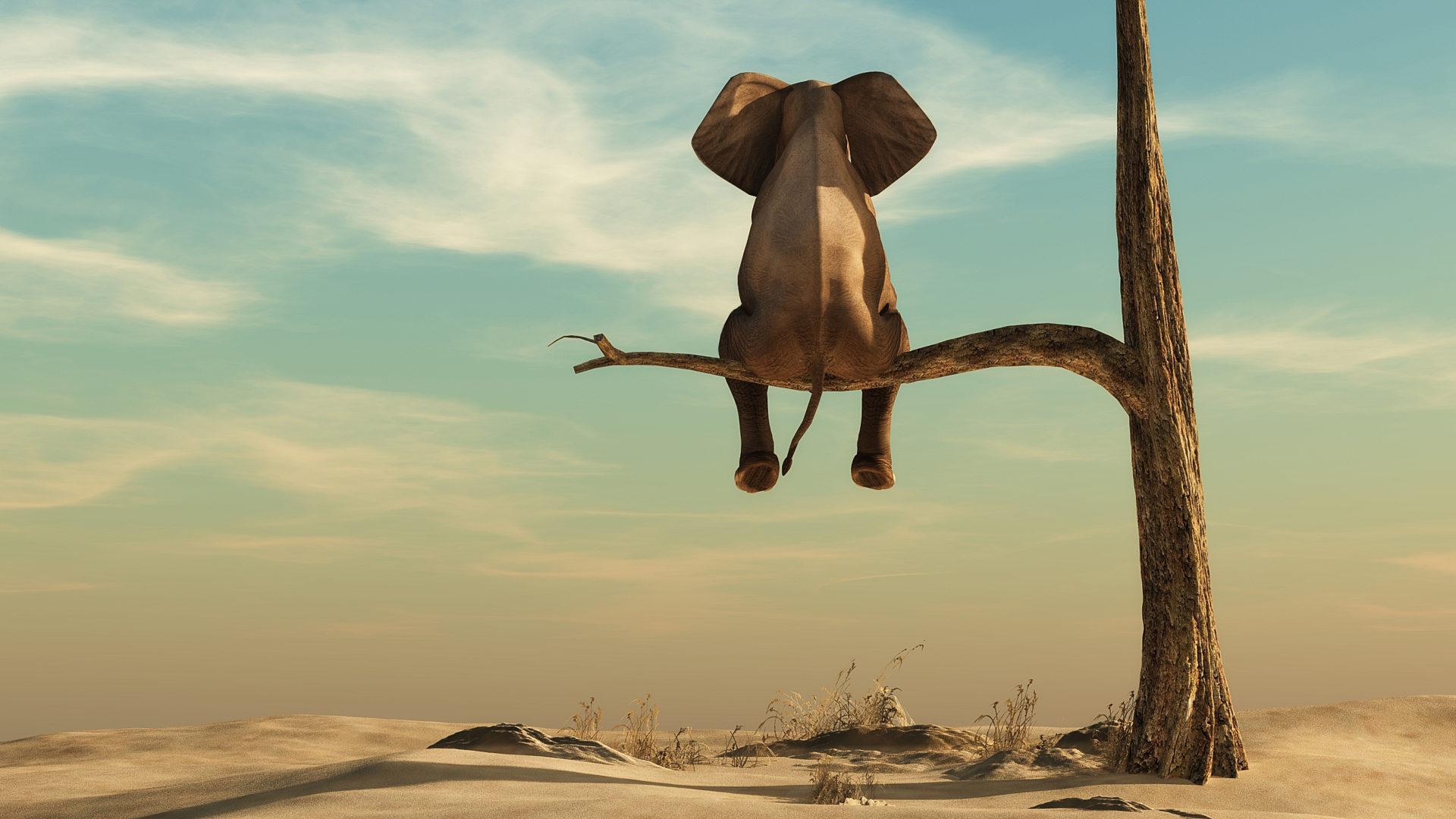 Éléphant seul sur un arbre