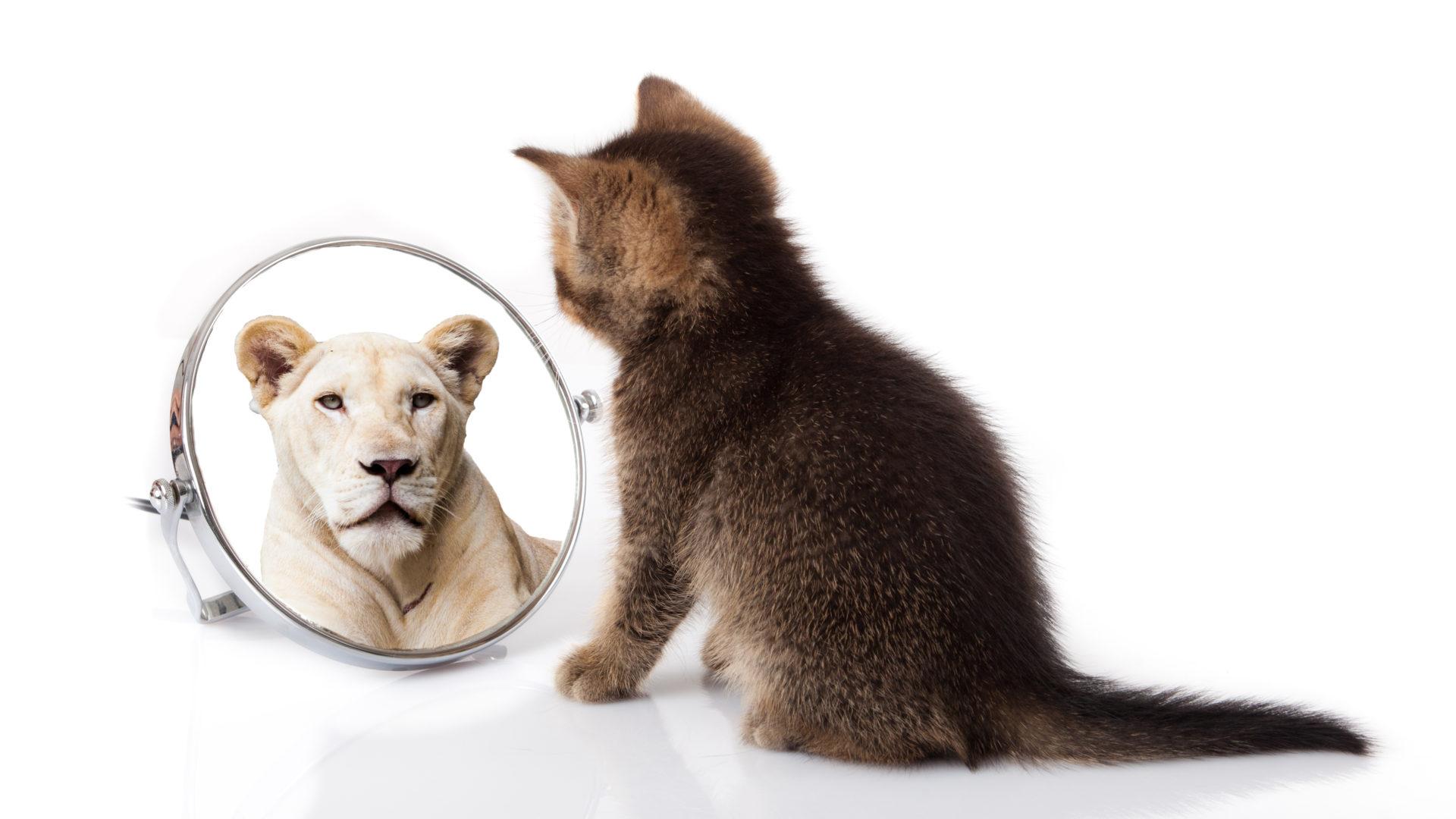 Image représentant nos croyances dans l'article Alpha and You Système de valeurs